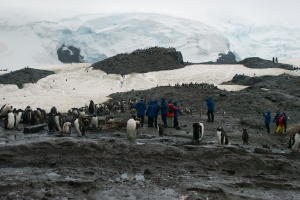 Hikers among the penguins