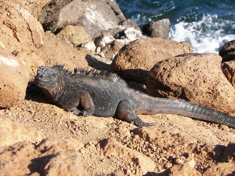 The Nights Of Iguana I'm Scared