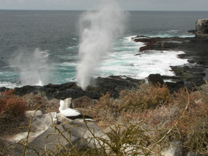 Blowhole on Espanola