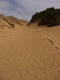 Trail over Sand Dunes