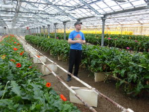 Greenhouse heated using geothermal energy