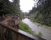 Fish Creek Bear Viewing